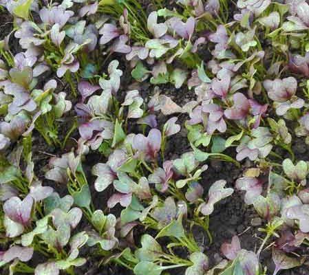 ferme-legume-deulin-6